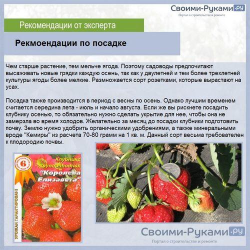 Выращивание клубники королева елизавета из семян
